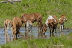 7982 Wild Ponies Mares Foals